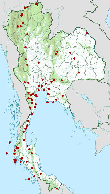 Distribution map of Japanese sparrowhawk, Accipiter gularis in Thailand
