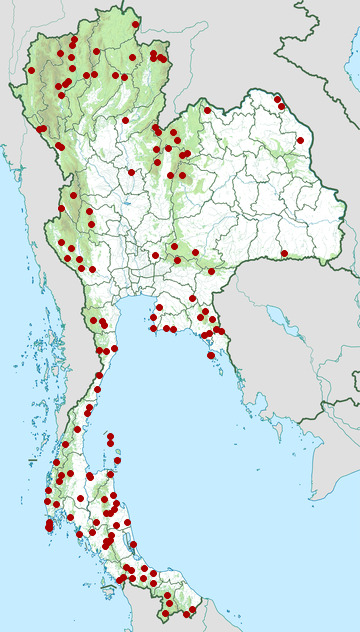 Distribution map of Oriental whip snake, Ahaetulla prasina in Thailand