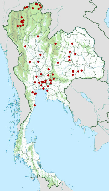 Distribution map of Red avadavat, Amandava amandava in Thailand