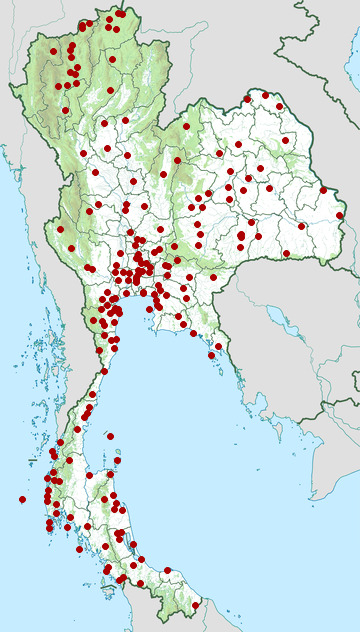 Distribution map of Great egret, Ardea alba in Thailand