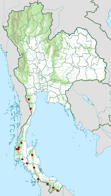 Distribution map of White-crowned hornbill, Berenicornis comatus in Thailand