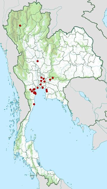 Distribution map of Black-headed ibis, Threskiornis melanocephalus in Thailand