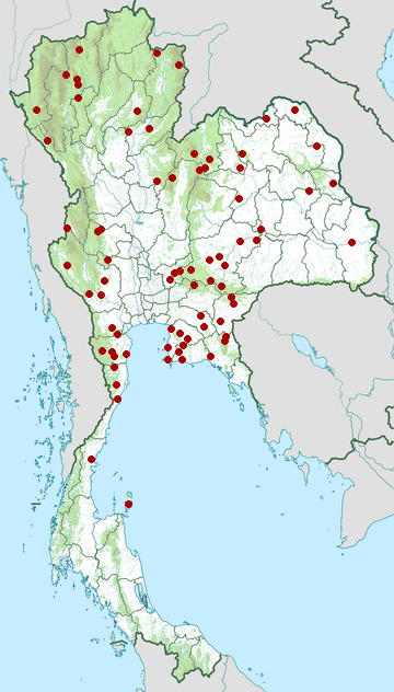 Distribution map of Many-spotted cat snake, Boiga multomaculata in Thailand