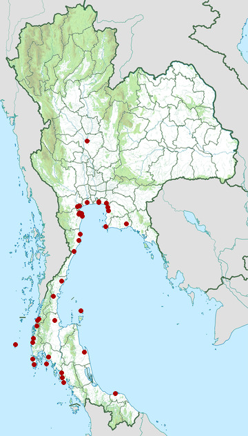 Distribution map of Greater sand plover, Charadrius leschenaultii in Thailand