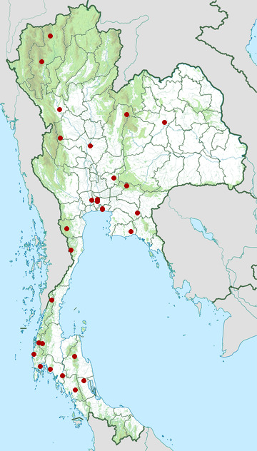 Distribution map of Chinese blue flycatcher, Cyornis glaucicomans in Thailand