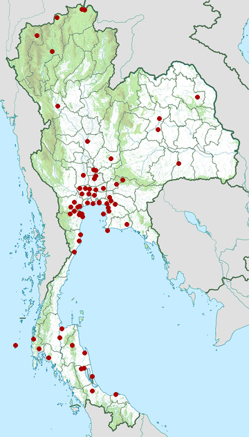 Distribution map of Whiskered tern, Chlidonias hybrida in Thailand