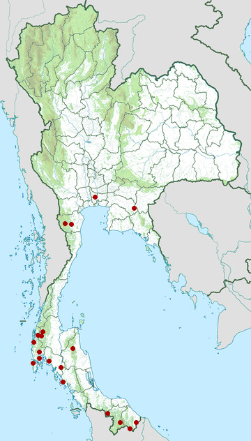 Distribution map of Black-and-red broadbill, Cymbirhynchus macrorhynchos in Thailand