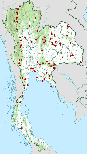 Distribution map of Hainan blue flycatcher, Cyornis hainanus in Thailand