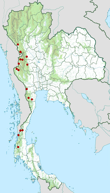 Distribution map of Sawtooth-necked bronzeback, Dendrelaphis nigroserratus in Thailand