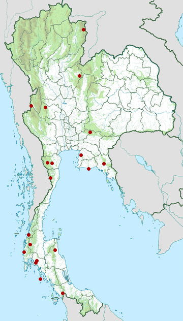 Distribution map of Barred flying dragon, Draco taeniopterus in Thailand