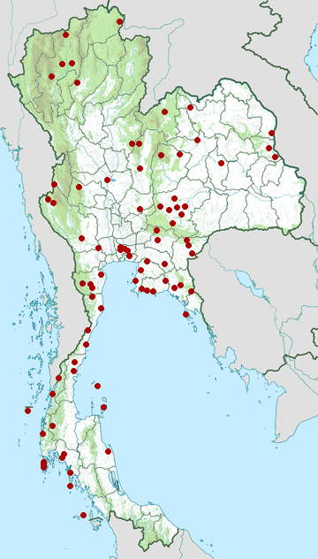 Distribution map of Black-spined toad, Duttaphrynus melanostictus in Thailand