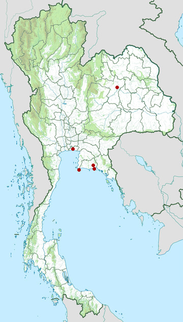 Distribution map of Fairy pitta, Pitta nympha in Thailand