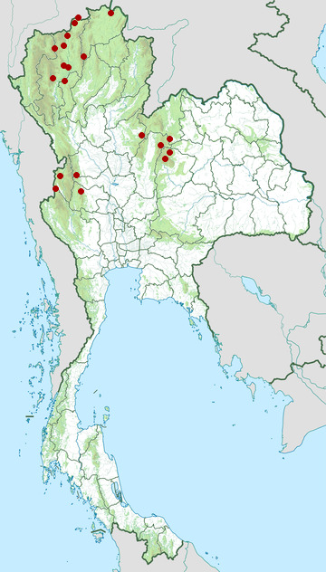 Distribution map of White-necked laughingthrush, Garrulax strepitans in Thailand