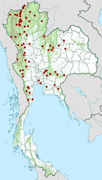 Distribution map of Golden-fronted leafbird, Chloropsis aurifrons in Thailand