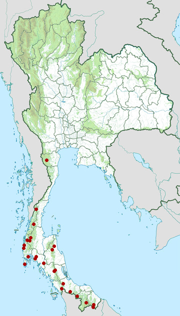 Distribution map of Gold-whiskered barbet, Psilopogon chrysopogon in Thailand