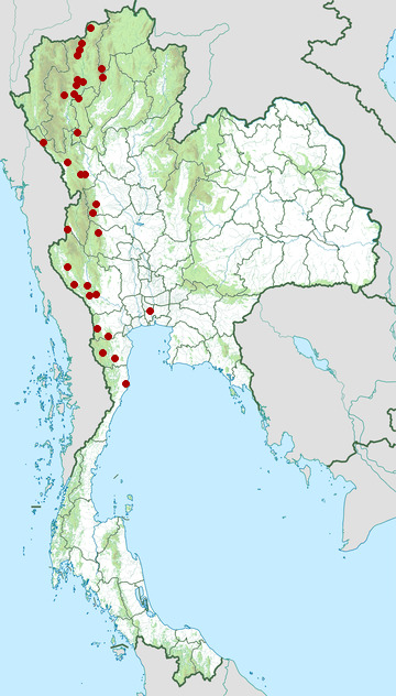 Distribution map of Greater necklaced laughingthrush, Garrulax pectoralis in Thailand