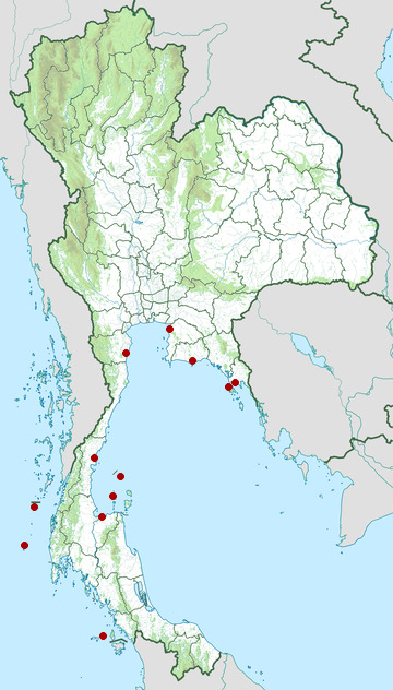 Distribution map of Green sea turtle, Chelonia mydas in Thailand