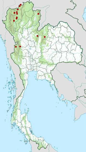 Distribution map of Dark-backed sibia, Heterophasia melanoleuca in Thailand