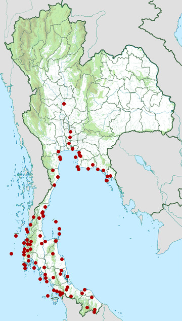 Distribution map of Pacific swallow, Hirundo tahitica in Thailand