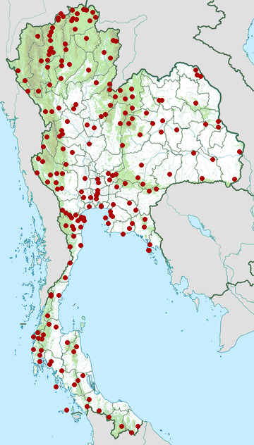 Distribution map of Black-naped monarch, Hypothymis azurea in Thailand