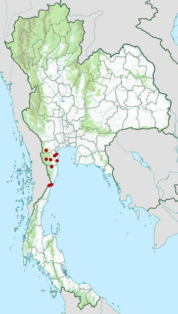 Distribution map of Thai snake skink, Isopachys anguinoides in Thailand