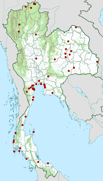 Distribution map of Kentish plover, Charadrius alexandrinus in Thailand