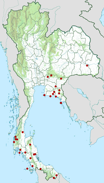 Distribution map of Van Hasselt's sunbird, Leptocoma brasiliana in Thailand