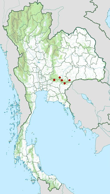 Distribution map of Big-mouthed fanged frog, Limnonectes megastomias in Thailand
