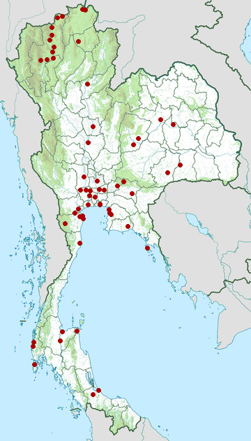 Distribution map of Pallas's grasshopper warbler, Locustella certhiola in Thailand