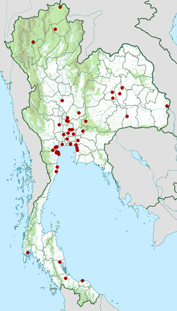 Distribution map of Long-toed stint, Calidris subminuta in Thailand