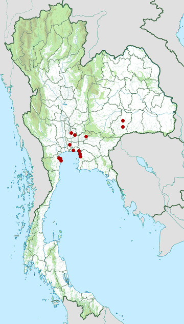 Distribution map of Milky stork, Mycteria cinerea in Thailand