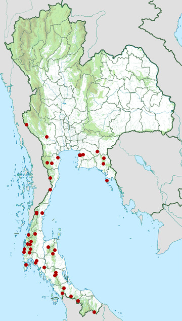 Distribution map of Ochraceous bulbul, Alophoixus ochraceus in Thailand