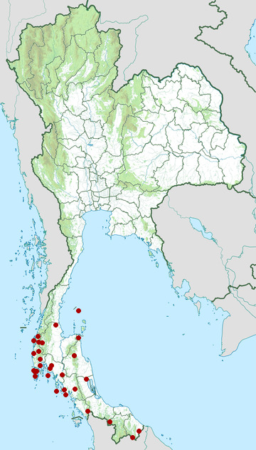 Distribution map of Olive-winged bulbul, Pycnonotus plumosus in Thailand