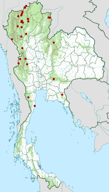Distribution map of Maroon oriole, Oriolus traillii in Thailand