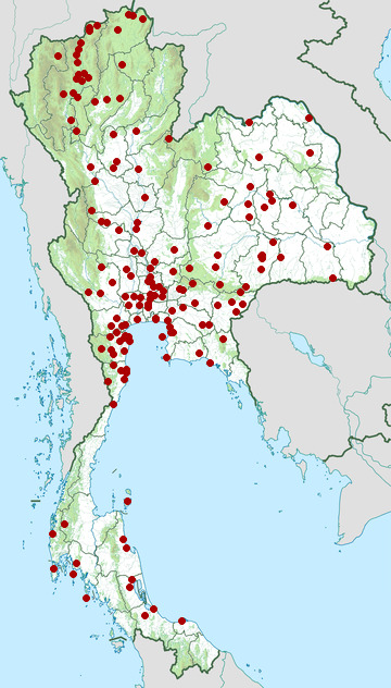 Distribution map of Plain-backed sparrow, Passer flaveolus in Thailand