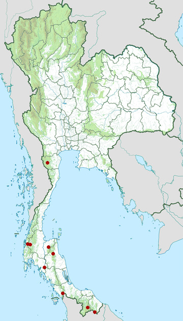 Distribution map of Crested jay, Platylophus galericulatus in Thailand