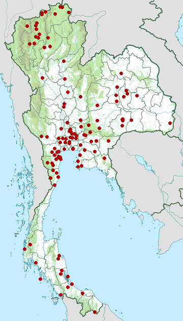 Distribution map of Baya weaver, Ploceus philippinus in Thailand