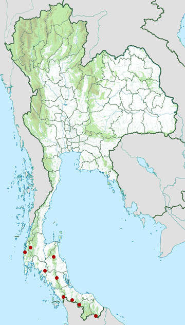 Distribution map of Puff-backed bulbul, Pycnonotus eutilotus in Thailand