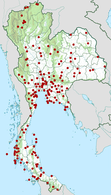 Distribution map of Yellow-vented bulbul, Pycnonotus goiavier in Thailand