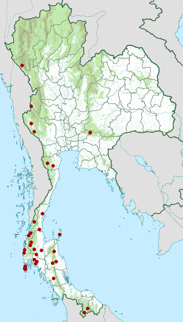 Distribution map of Brongersma's blood python, Python brongersmai in Thailand