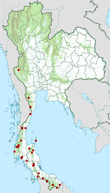 Distribution map of Raffles's malkoha, Rhinortha chlorophaea in Thailand