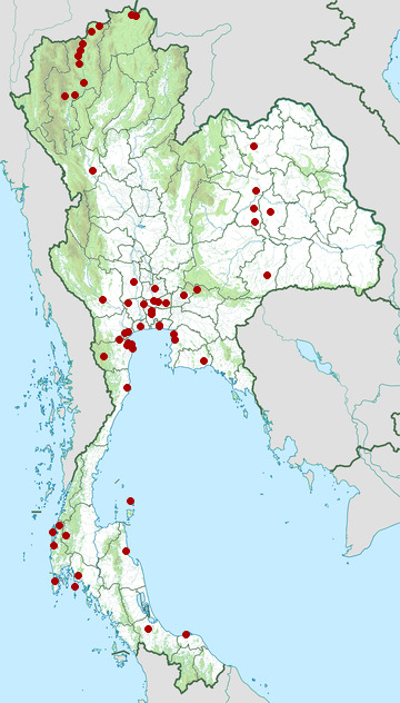 Distribution map of Ruddy-breasted crake, Zapornia fusca in Thailand