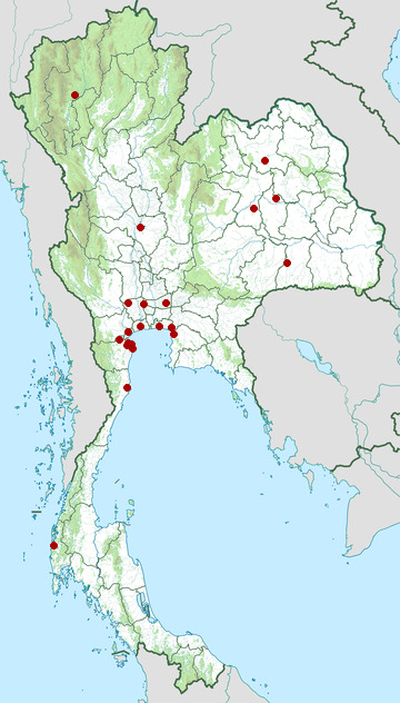 Distribution map of Ruff, Calidris pugnax in Thailand