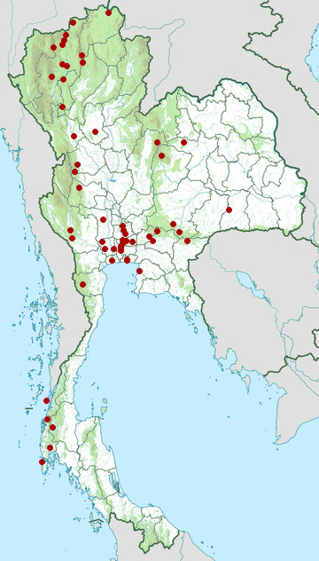 Distribution map of Small minivet, Pericrocotus cinnamomeus in Thailand