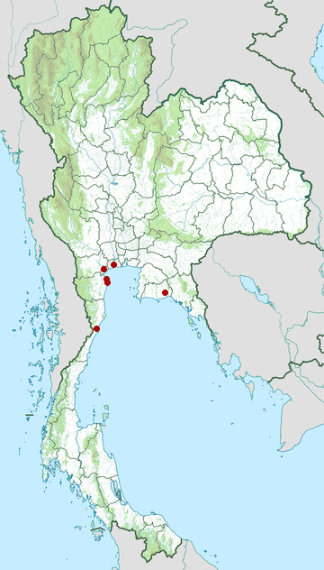 Distribution map of Spoon-billed sandpiper, Calidris pygmeus in Thailand