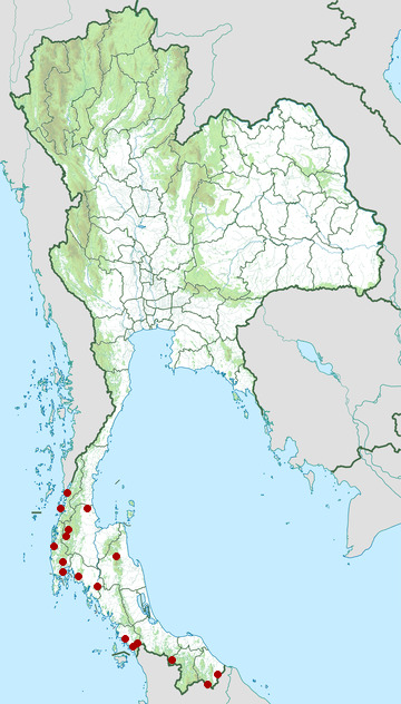 Distribution map of White-chested babbler, Trichastoma rostratum in Thailand
