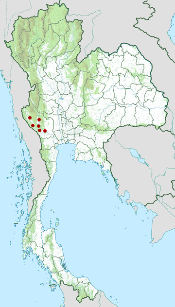 Distribution map of Kanburi pit viper, Trimeresurus kanburiensis in Thailand
